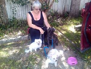 Upper coomera 4209 qld pet services gumtree australia free upper coomera 4209 qld pet services gumtree australia free local classifieds solutioingenieria Gallery