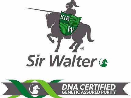 Sir Walter Buffalo Turf - Brisbane | Sunshine Coast | Gold Coast|