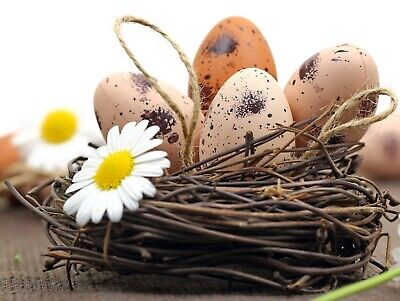 Kühlschrank magnet Ostern Tafel Eier Foto Büro kuche Hase Souvenir Geschenk  ()