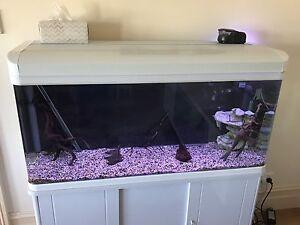 Fish Tank / Aquarium (4 ft) South Launceston Launceston Area Preview