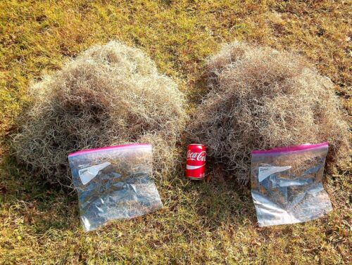 Live Spanish Moss 1 lb. Total Mail Weight Very Clean Patio Garden Home Decor