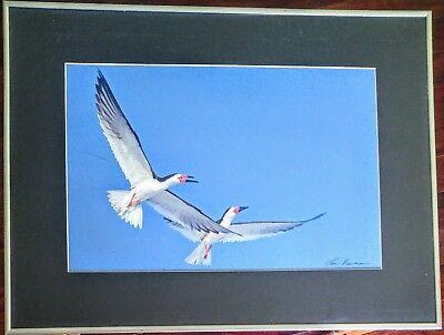 Bird Wildlife Photography - Flying Black Skimmer - Lou Newman Art Print
