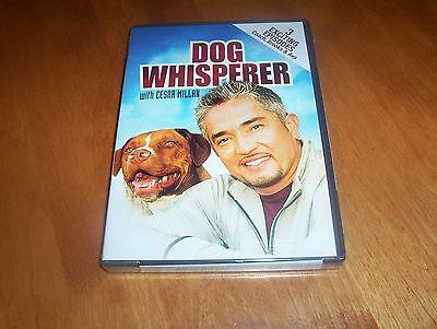 DOG WHISPERER Cesar Millan with Harry & Brooks Sueki & Coach Gus & Ava DVD NEW