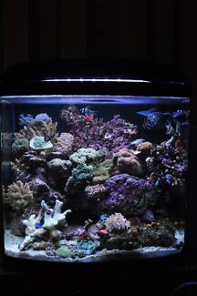 SALE!!! Aquatopia 80L Nano Marine - FISH TANK ONLY!! Point Cook Wyndham Area Preview