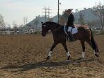 GSAR Equine