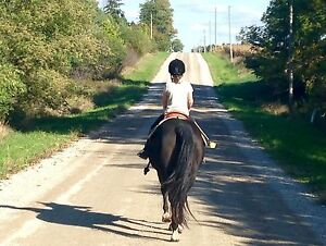 Still spaces left in our PA HORSE camp this Friday London Ontario image 7