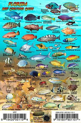 Florida Reef Creatures Guide Waterproof Fish Identification Card 4