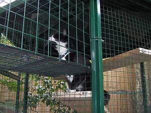 *** MAKE YOUR CAT HAPPY **** GIVE THEM SOME FREEDOM*** Macedon Ranges Preview
