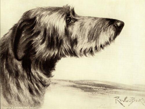 1930s Antique DEERHOUND Dog Print Ward Binks Deerhound Dog Art Print 3855k
