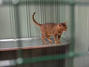 **** CAT HAMMOCKS & CAT SHELVES Ass Sizes ****** Preston Darebin Area Preview