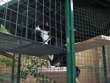 IS YOUR CAT SAFE AT NIGHT ??????????? We Can Help ! Preston Darebin Area Preview