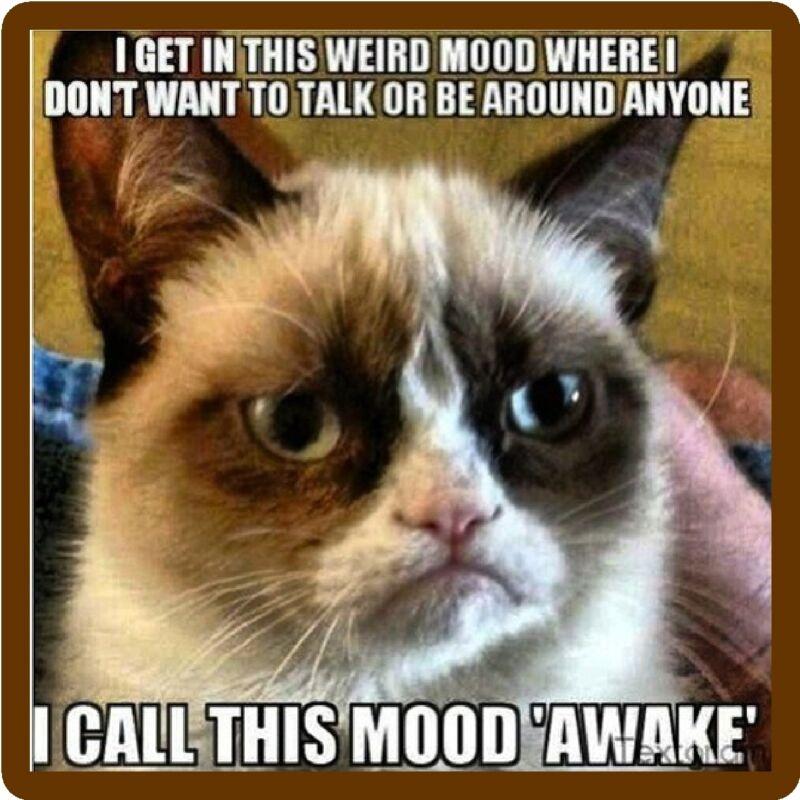 Funny Grumpy Cat Mood Awake  Refrigerator Magnet