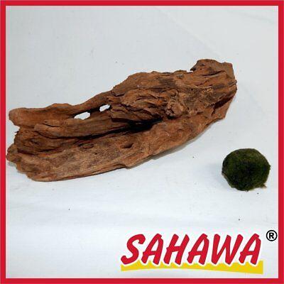 Wurzel,Mangrovenwurzel,1Mangrove, Aquariumwurzel+ Mooskugel Gratis Sahawa® 20-26
