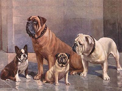 MASTIFF FRENCH BULLDOG PUG BRITISH BULLDOG DOG PRINT MOUNTED READY TO FRAME
