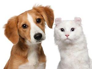 Cheap Pet Sitting Available Kelmscott Armadale Area Preview