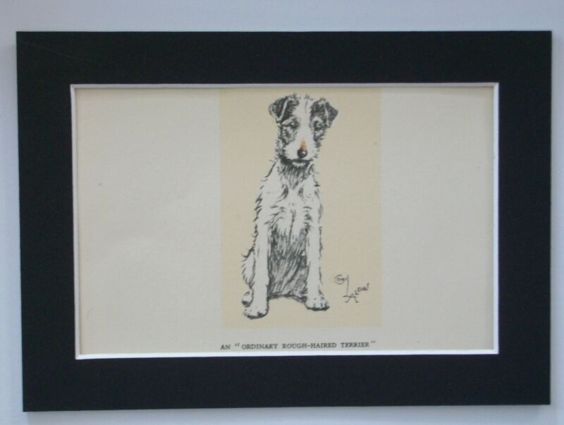 Rough Haired Terrier Dog Print Cecil Aldin Patiently Waiting 1934 Bookplate wMat