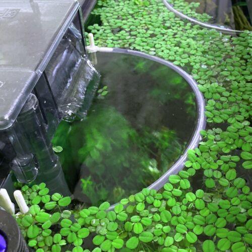 Floating Plants Corral - Self Adjusting - 3D printed - Aquarium Safe