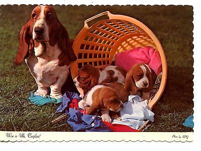Basset Hound Mom-Cute Litter of Puppies in Laundry Basket-Modern Postcard