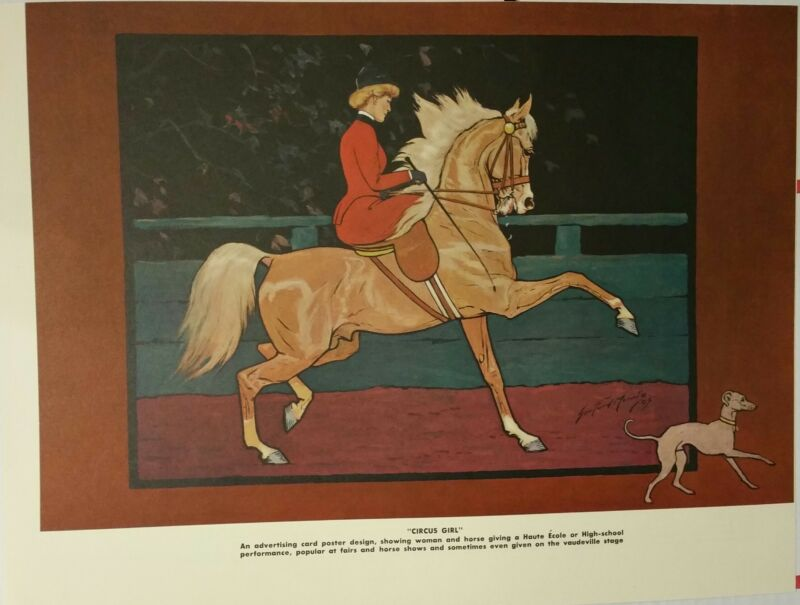 VNTGE SIDESADDLE DRESSAGE PALOMINO ARAB WHIPPET GEORGE FORD MORRIS 1952 PRINT