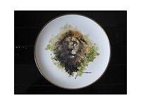 Wedgwood Spink David Shepherd Wildlife Series Plate-LION
