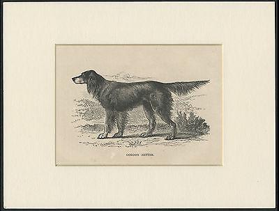 GORDON SETTER NAMED DOG HEAD STUDY OLD ORIGINAL DOG PRINT FROM 1934