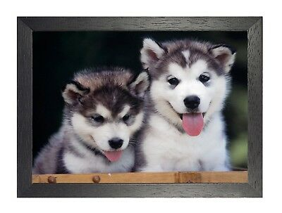 Siberian Husky Small Pups Love Cute Sweet Animal Wild Poster Dogs Picture Friend ()