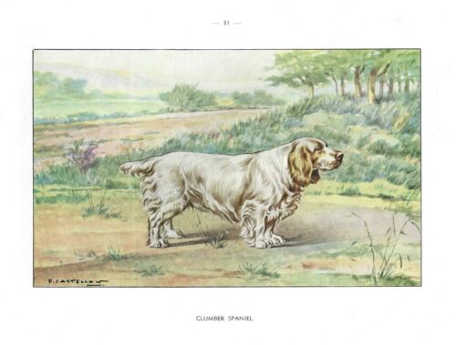 1930 Art Watercolor Castellan France Vintage Dog Portrait Print CLUMBER SPANIEL