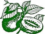 fruit-tree-nursery-australia