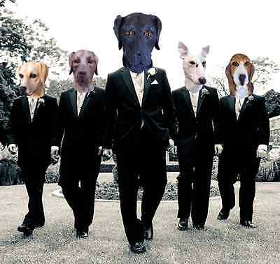 Lustig Latex Hund Tiermasken für Erwachsene Labrador Beagle Bluthund Kostüm ()