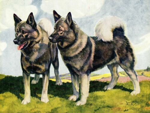 1930s Antique Norwegian Elkhound Print Nina Scott Langley Elkhound Art 3460-J