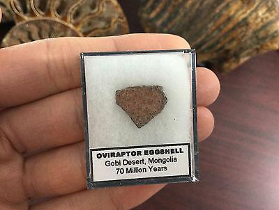 Oviraptor Dinosaur Eggshell, 10-20mm - Gobi Desert Eggshell Fossil