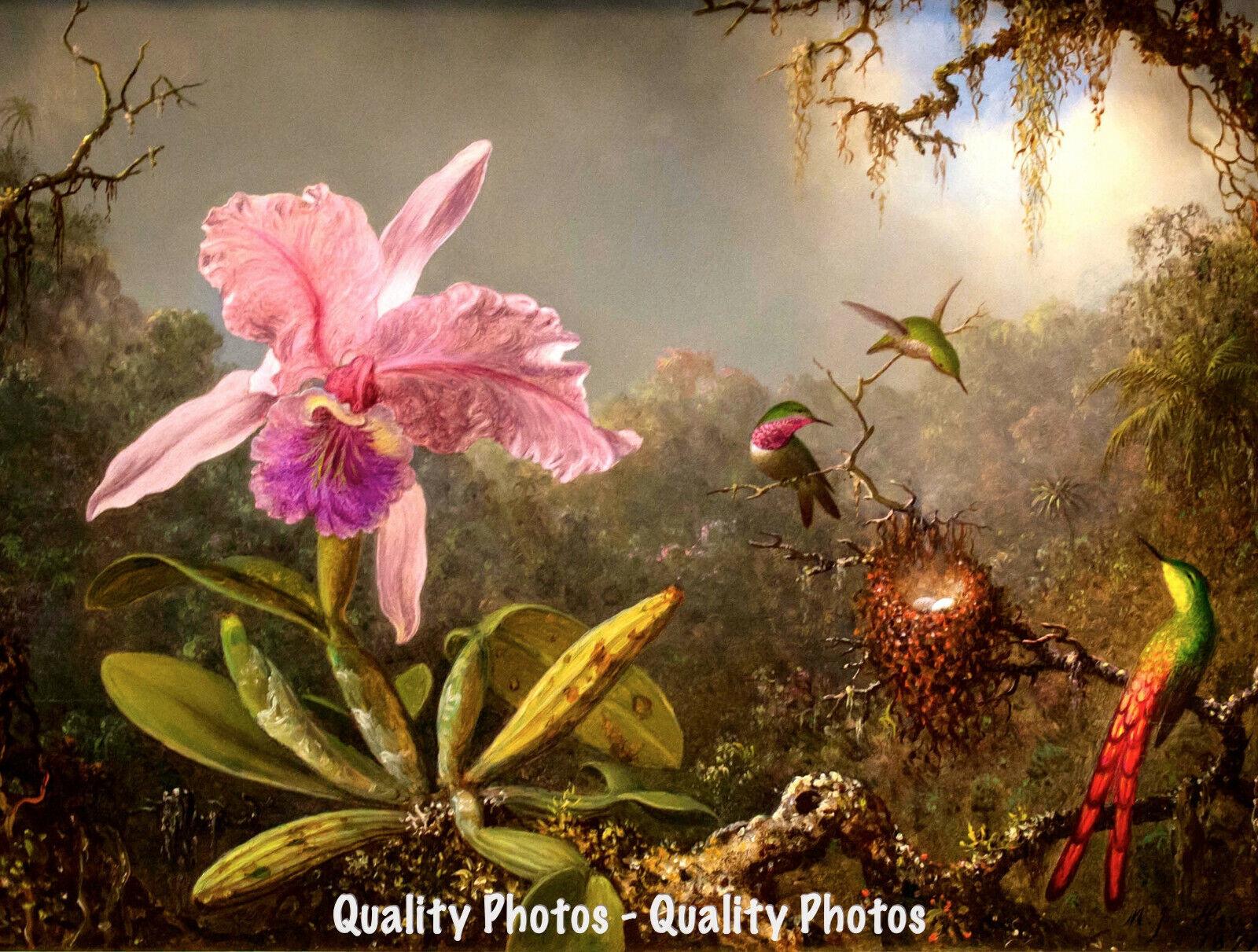 "Cattelya Orchid /& Three Brazilian Hummingbirds 8.5x11/"" Photo Print Martin Heade"