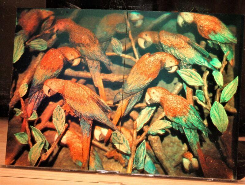 Hologram art (rare matching set): two 4x5 color photopolymer Parrots Japan 1998