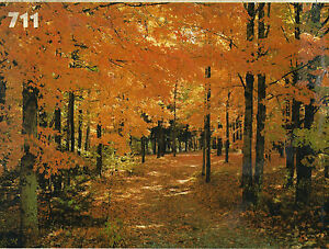 Beautiful Photo Wall Mural-Autumn Road---GREAT PRICE!!