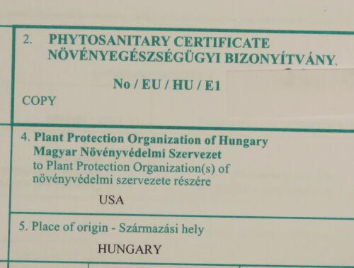 Phytosanitary certificate,Caudex,Euphorbia,Bulb