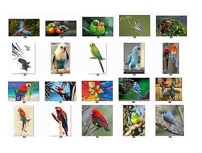 30 Personalized Return Address Labels Beautiful Birds Buy 3 Get 1 Free Bi1
