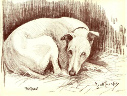 1930s Antique Whippet Print Vintage Nina Scott Langley Whippet Dog Art 3522-P