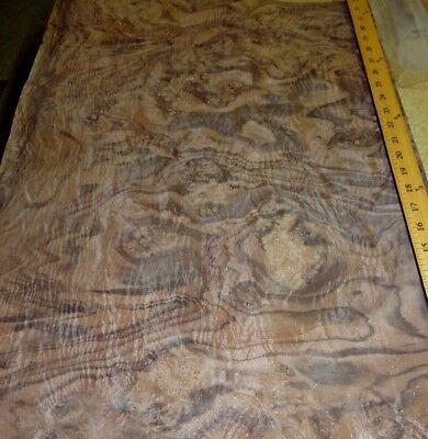 Walnut Burl Wood Veneer 19 X 29 Raw Veneer No Backing Aaa Quality Grade