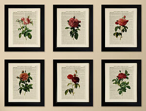 SET-OF-6-ART-PRINTS-ON-OLD-ANTIQUE-BOOK-PAGE-Flowers-Roses-Vintage-Upcycled