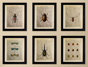 SET-OF-6-ART-PRINTS-ON-OLD-ANTIQUE-BOOK-PAGE-Insects-Beetles-Vintage-Upcycled