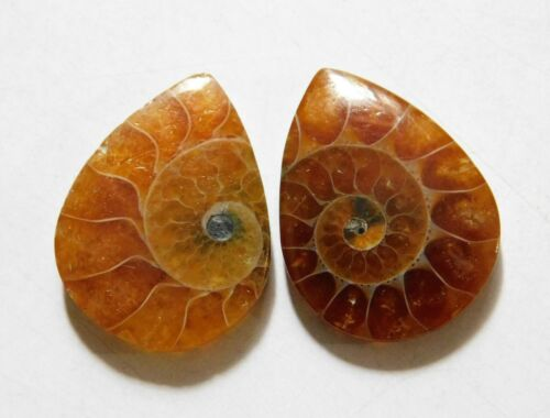 23.00 Cts Natural Ammonite (22mm X 17mm each) Loose Cabochon Match Pair