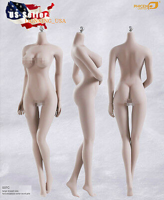 Phicen 1/6 Super-Flexible Seamless Pale Body L Bust Steel Skeleton S07C ❶USA❶