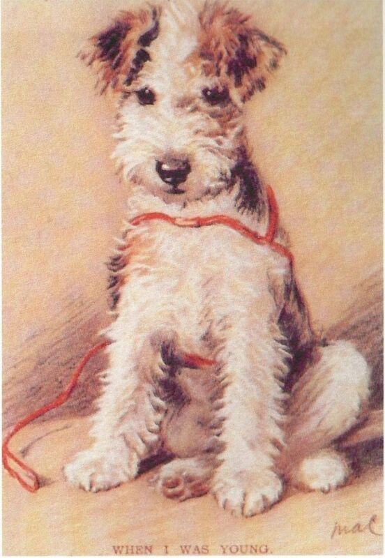 Fox Terrier Pup - MATTED Dog Print - Lucy Dawson NEW