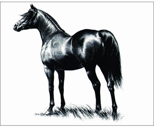 """Sticker 4""""x 5"""" Single  Horse ,Equestrian,Cowboy, Cowgirl,Western Rider,Ranch,"""