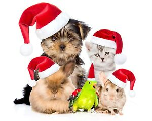 Christmas is creeping up, book your holiday critter care now!