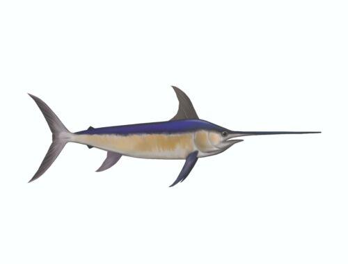 Swordfish Mount
