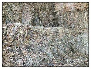 Horse hay for sale (Lavington) $8.50 per bale