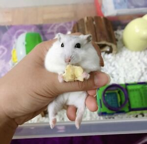 Looking for someone to take care of my hamster