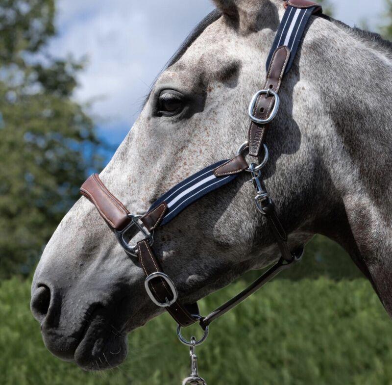 Antares Elastic Stressless Halter Horse Size 1