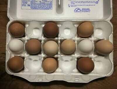 6 Fertile Chicken Hatching Eggs Barnyard Mix